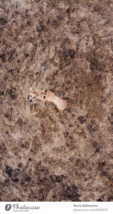 Hund auf dem Mars Haustier Sand Spazierengehen mit einem Hund Raum aus dem Weltraum Senden zum Mars Spaziergang Dröhnen Drohnenansicht Tier Außenaufnahme Natur