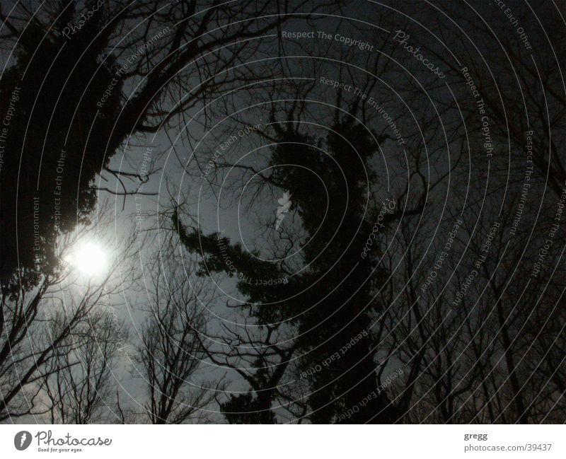 moon light @ cemetary Himmel Baum Dresden Mond unheimlich Friedhof Mondschein