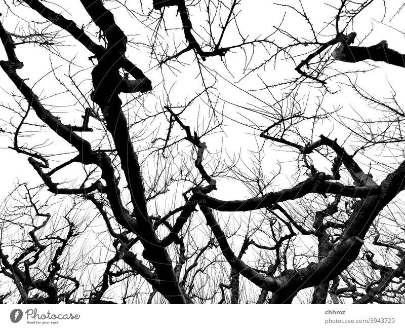 Apfelbaum Zweige u. Äste silouhette Froschperspektive Obstbaum Stamm verweigern Baum Natur Außenaufnahme Pflanze Himmel Herbst Winter baumschnitt wirrwarr