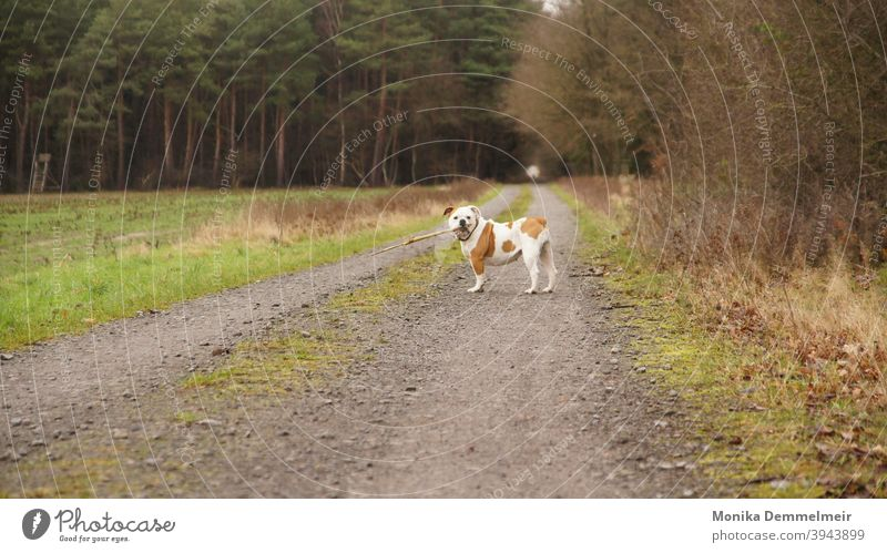 Lotta Hund Haustier Tier Farbfoto Außenaufnahme Tierporträt Tag Tiergesicht Menschenleer niedlich Tierliebe Blick Blick in die Kamera schön Fell Schnauze