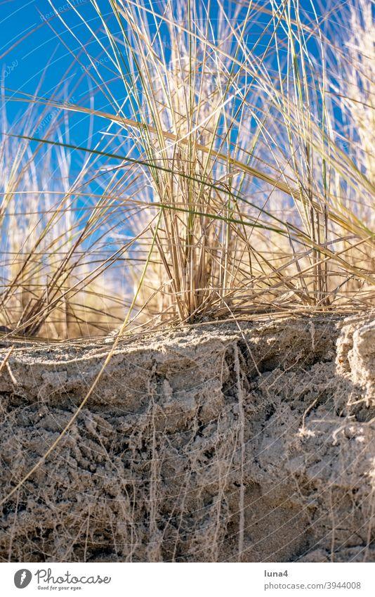 Düne an der Ostsee Gras Dünengras Küste Schutz Küstenschutz Pflanze Wurzel Strand Sand Sanddüne Stranddüne Natur Rügen Insel niemand Himmel blau Deutschland