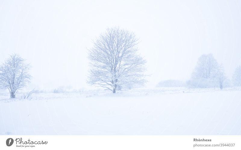 Winterwonderland mit verschneiten Bäumen im Nebel weiß Wunderland Wetter Baum Himmel Textfreiraum im Freien Natur einsam eisig Eis Schönheit Nebliger Wald Frost