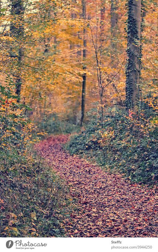 herbstliche Erinnerung Herbstwald Waldweg Herbsttag Fußweg Herbstlaub Menschenleer Herbstgefühle warme Farbe Unschärfe Natur Farbfoto Herbstlandschaft
