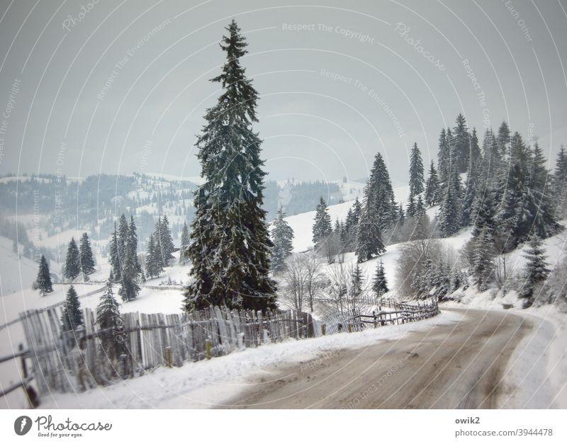 Über die Karpaten Landschaft Winter Horizont Natur Umwelt Himmel Reiseroute Reisefotografie Ferne Berge u. Gebirge Idylle Pass Farbfoto Gedeckte Farben