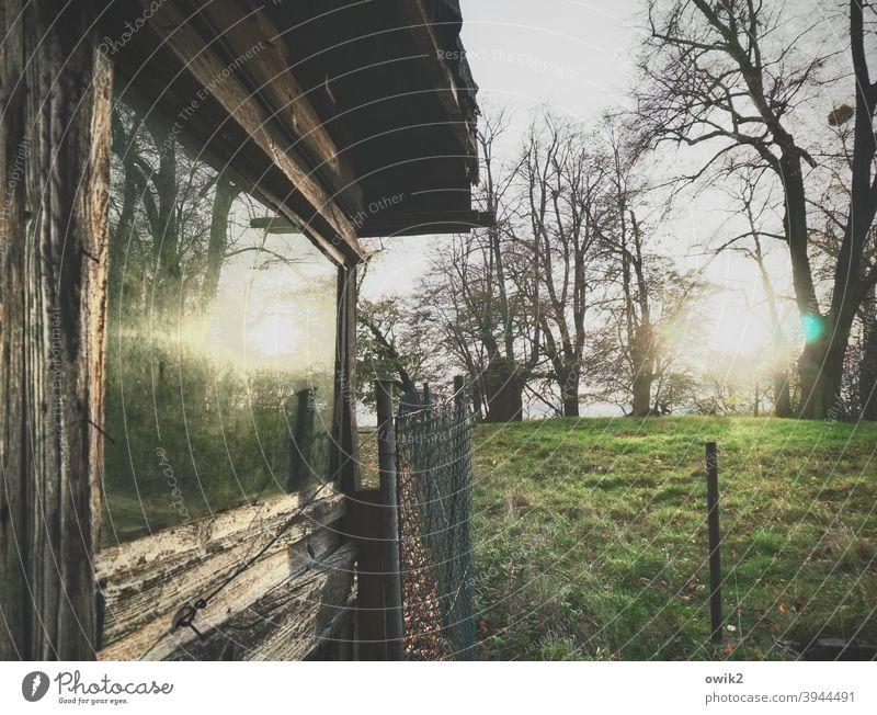 Am Zaun Garten Fenster Wiese Bäume Spiegelung Häuschen Glas Schuppen Gras Sonne Natur Sonnenlicht Farbfoto Abend Reflexion & Spiegelung Zaunpfahl Landschaft