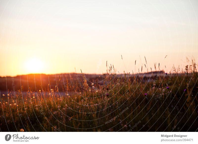 Sommer Sonne Wiese Umwelt Natur Landschaft Pflanze Himmel Wolkenloser Himmel Sonnenaufgang Sonnenuntergang Gras Feld genießen Abenddämmerung Gegenlicht Stimmung