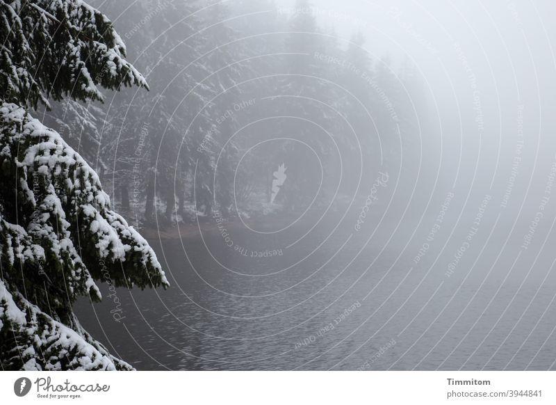 Eine wehrsame Fichte wacht über den winterlichen See Nebel Winter Wald Mummelsee Schnee Natur kalt Menschenleer Farbfoto