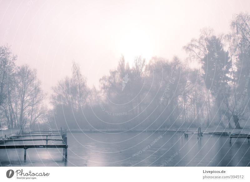 Müritzseepark Himmel Natur blau Wasser Pflanze Sonne Baum Landschaft ruhig Wolken Blatt Winter Umwelt Holz See Eis
