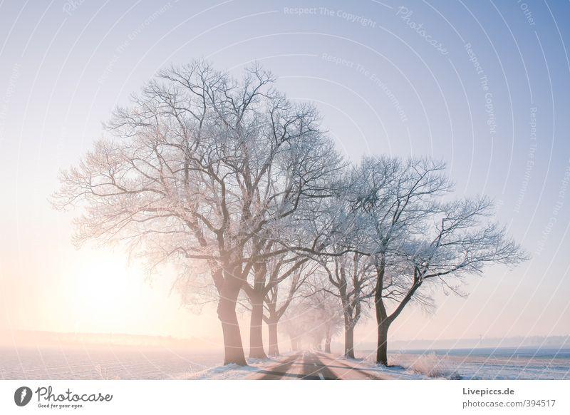 Straße nach Priborn Umwelt Natur Landschaft Pflanze Himmel Wolkenloser Himmel Sonne Sonnenaufgang Sonnenuntergang Sonnenlicht Winter Schönes Wetter Nebel Eis