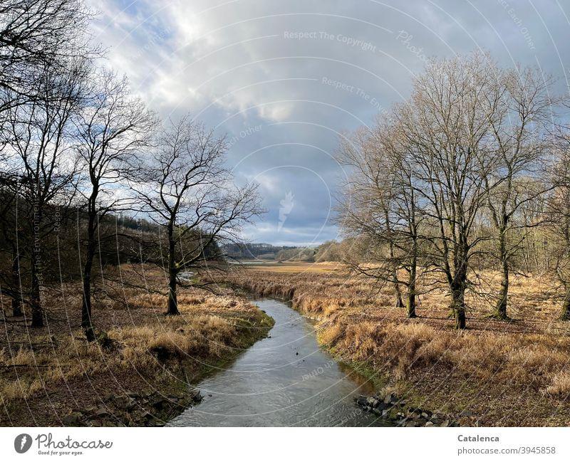 Ein Bach schlängelt sich durchs hohe, trockene Gras, rechts und links stehen Laubbäume. Wolken ziehen vorbei Tageslicht Landschaft kalt Winter Himmel ,wandern
