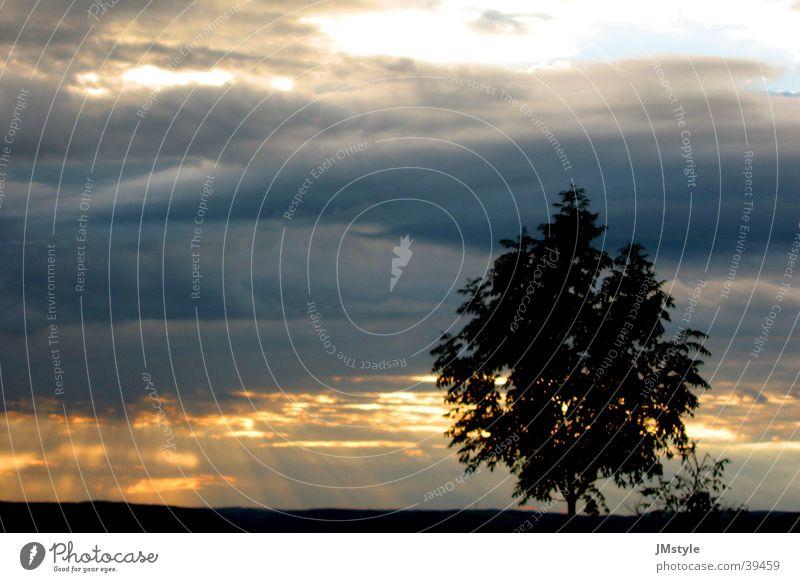 beautiful sunset Sonnenuntergang Wolken Baum dunkel Feld Beleuchtung Natur Landschaft
