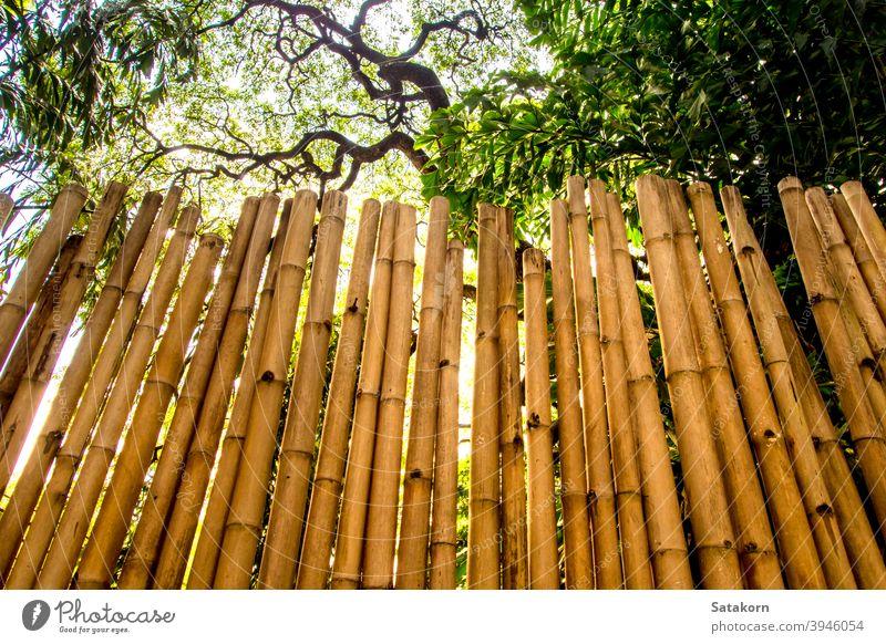 Textur der natürlichen Fällung Wanddekoration aus Bambus gelb braun Baum Panel Farbe Dekor Design Licht Material Holz hölzern Schreinerei Nahaufnahme Natur