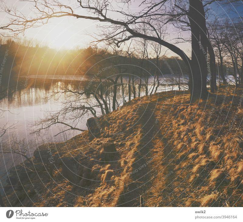 Weg da Wald Wege & Pfade Seeufer leuchten mehrfarbig Idylle glänzend hell Sträucher Gras Baum Schönes Wetter Klima Horizont Himmel Erde Pflanze Landschaft Natur