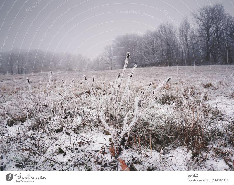 Wintersachen Landschaft Sträucher Eiskristalle frieren Muster bizarr Tag Himmel Nebel Strukturen & Formen Natur Gedeckte Farben Pflanze Schwache Tiefenschärfe