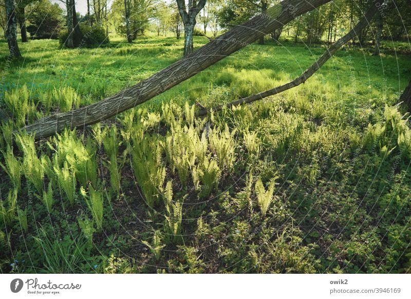 Grüner Teppich Landschaft Natur Umwelt Pflanze Baum Wärme Gras Sträucher Baumstamm Schönes Wetter mehrfarbig Farbfoto Menschenleer Außenaufnahme Sonnenlicht