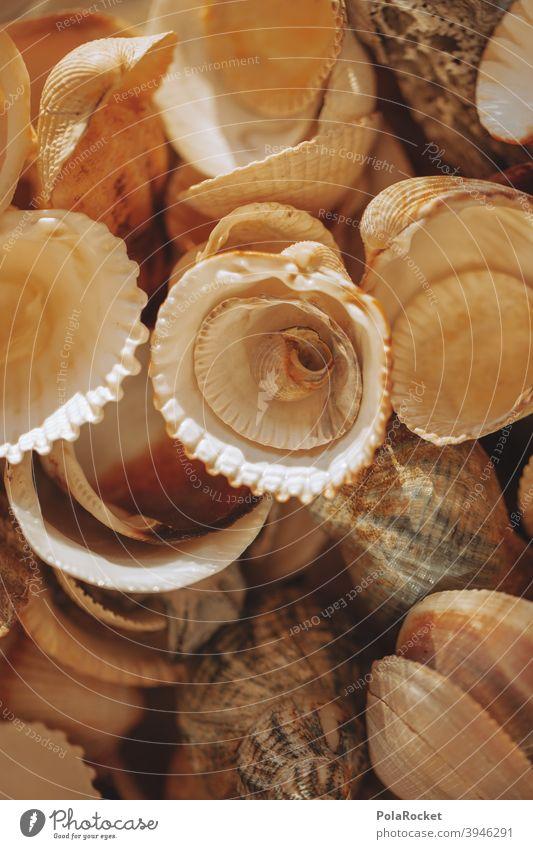#A0# viele Muscheln gesammelt Muschelschale muscheln Muschelform muschelsucher muscheln sammeln Muscheln im Hintergrund Meer Küste