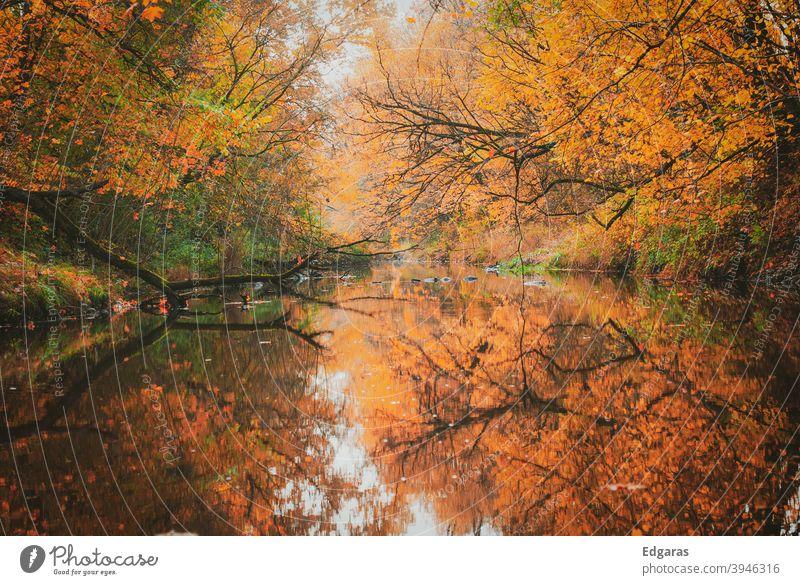 Herbstfarben und Reflexion auf dem Wasser fallen Herbstfärbung Herbstlaub Außenaufnahme Herbstwetter herbstlich Herbstbeginn Herbstlandschaft Blatt Farbfoto