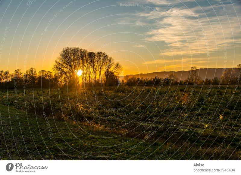 Sonnenuntergang in den Bäumen ländlich gelb Natur Landschaft Feld Himmel Baum Ackerbau Herbst schön im Freien Umwelt Saison blau Ansicht fallen grün Horizont