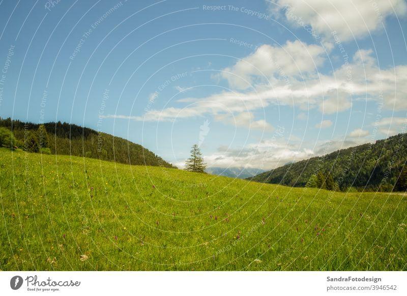 Eine grüne Wiese, Wald und blauer Himmel Hintergrund Überstrahlung Blauer Himmel Umwelt Europa Flora Blume Gras wandern Feiertag Landschaft natürlich Natur