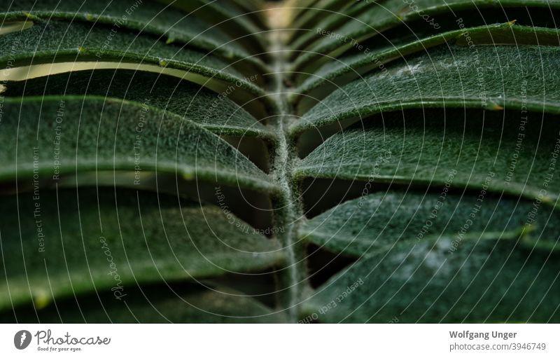 Ein Blatt in Nahaufnahme in Schatten und Licht in jena Hintergrund Textur Wasser grün Natur Struktur Details Pflanze Pflanzen natürlich Garten botanisch Flora