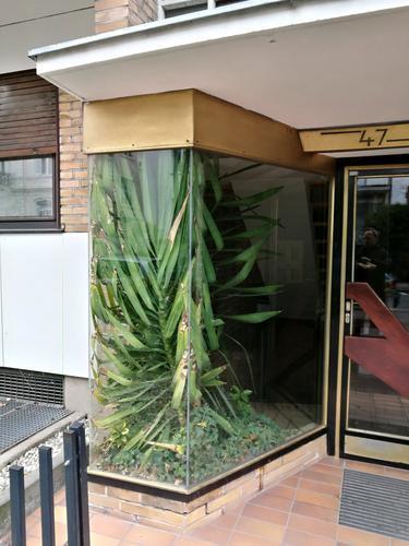 Grünpflanze in einem Schaufenster neben einem Hauseingang im Stil der Sechzigerjahre im Westend von Frankfurt am Main in Hessen Fenster Glas Vitrine Pflanze