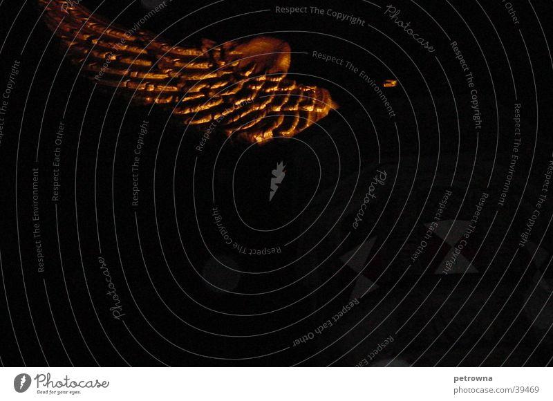 Flügel der Nacht Kunst Köln obskur Nachtstimmung