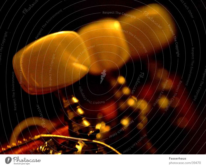 Die Einstellung Musik Romantik Konzert Ton Klang Musikinstrument Lied Saite Skala Eiche Anpassung musizieren Vorbereitung Einstellungen stimmen Saiteninstrumente