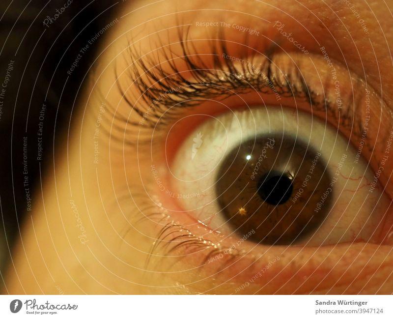 Makroaufnahme eines Auges / braune Augenfarbe / erschrockener Blick Mann Gesicht Mensch Angst dunkel Panik Wimpern Pupille Regenbogenhaut Nahaufnahme Haut