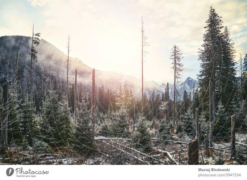 Winterliche Berglandschaft, Tatra-Nationalpark, Polen. Landschaft schön Wald Schnee Berge kalt Wildnis Sonne Himmel im Freien Natur Frost Saison