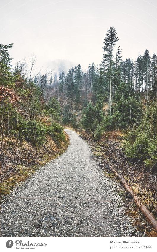 Tatra-Gebirge Landschaft an einem regnerischen Tag, Polen. Berge Wald Regen retro altehrwürdig Natur Baum grün Tatra-Nationalpark Wildnis im Freien Saison