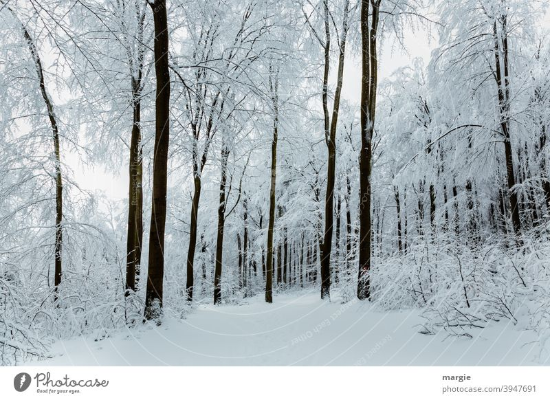 Ein tief verschneiter Winterwald Schnee Eis Baum Landschaft Frost kalt Laubbaum Totale Außenaufnahme Menschenleer Gedeckte Farben Farbfoto frieren