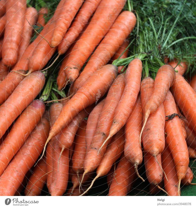 frische Möhren, gebündelt mit Grünzeug Karotten Wurzeln Gemüse Vegetarische Ernährung Bioprodukte Lebensmittel Gesundheit Farbfoto lecker Gesunde Ernährung