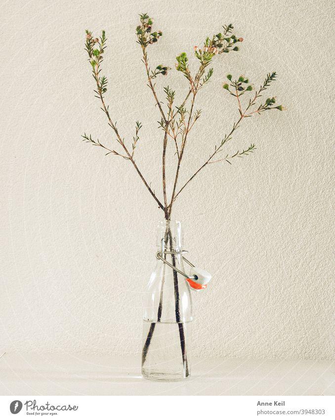 Grüne Zweige in kleiner Glasflasche auf weissem Hintergrund. Vase grün Dekoration & Verzierung Menschenleer weiß Innenaufnahme Pflanze Natur