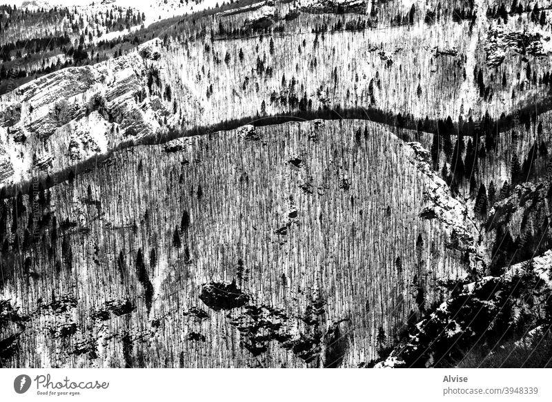 Bäume und Schnee eins Landschaft Winter Baum Natur Berge u. Gebirge kalt Wald weiß unverhüllt Eis Saison Frost Himmel gefroren Szene malerisch im Freien reisen