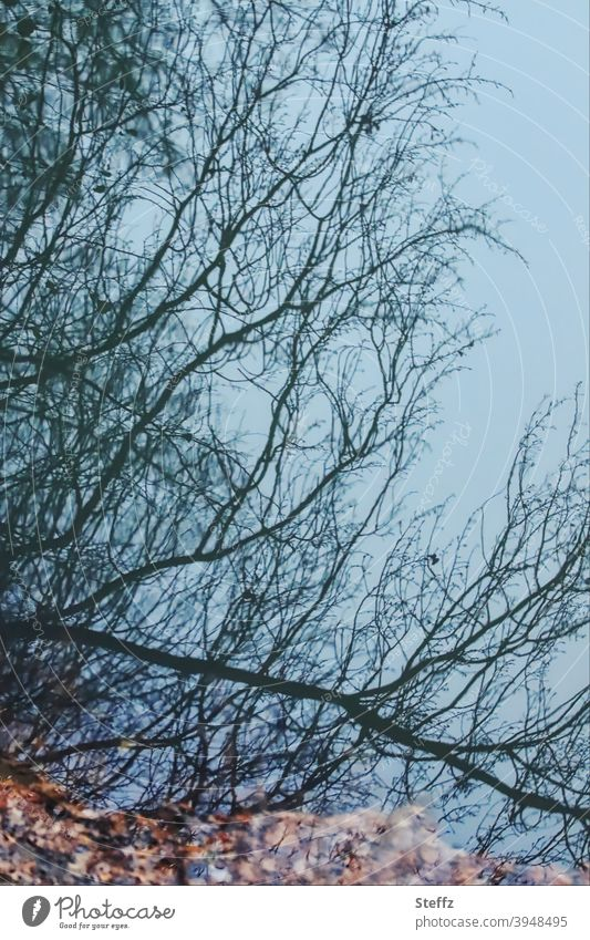 Abbild der Realität Spiegelung blau Verzerrung real irreal Spiegelei Wasserspiegelung Spiegelung im Wasser verzerrt Herbstlaub Spiegelbild gespiegelt Äste