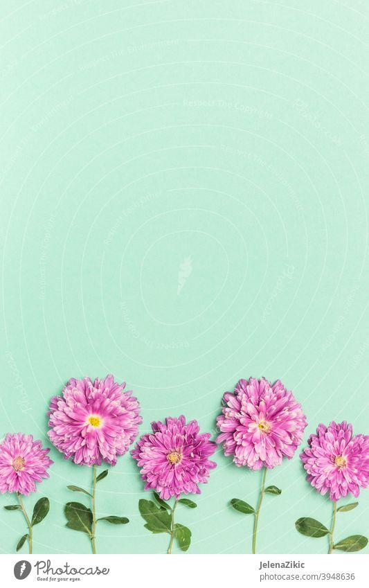 Kreatives Layout mit violetten Blumen auf pastellgrünem Hintergrund Zusammensetzung Design Postkarte geblümt Sommer Hochzeit Natur schön altehrwürdig Pflanze