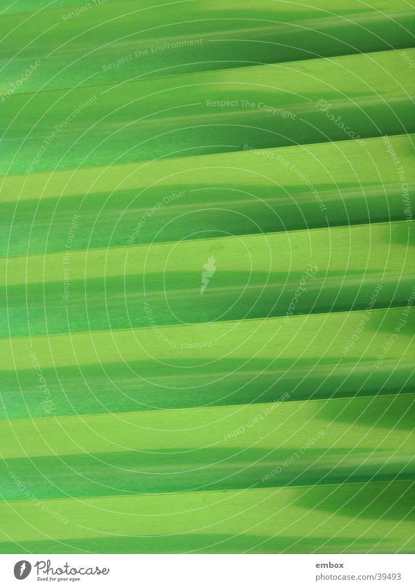 Ein Hauch von Grün grün glänzend Häusliches Leben Wetterschutz Jalousie Lamelle Rollo