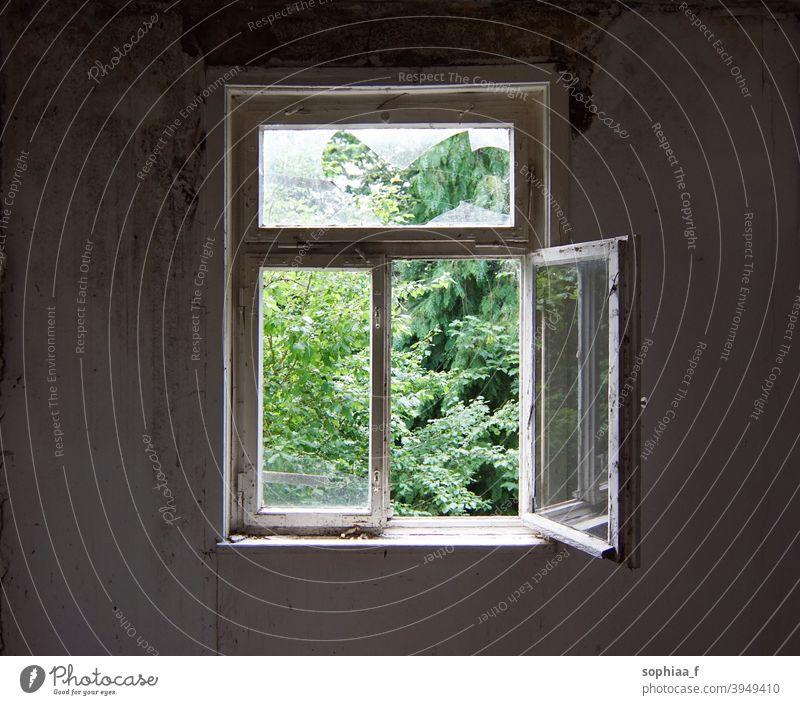 offenes Fenster in einem alten verlassenen Haus, verlorener Ort Brise Atem Verlassen Freiheit Air nach draußen schauen Verlorener Ort Ansicht Rahmen grün Glas