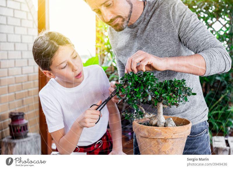 Älterer Mann, der seiner Tochter die Pflege eines Bonsai beibringt Garten alt Hobby Pflanze asiatisch Gartenarbeit Senior 40s Vater Lehre Kind