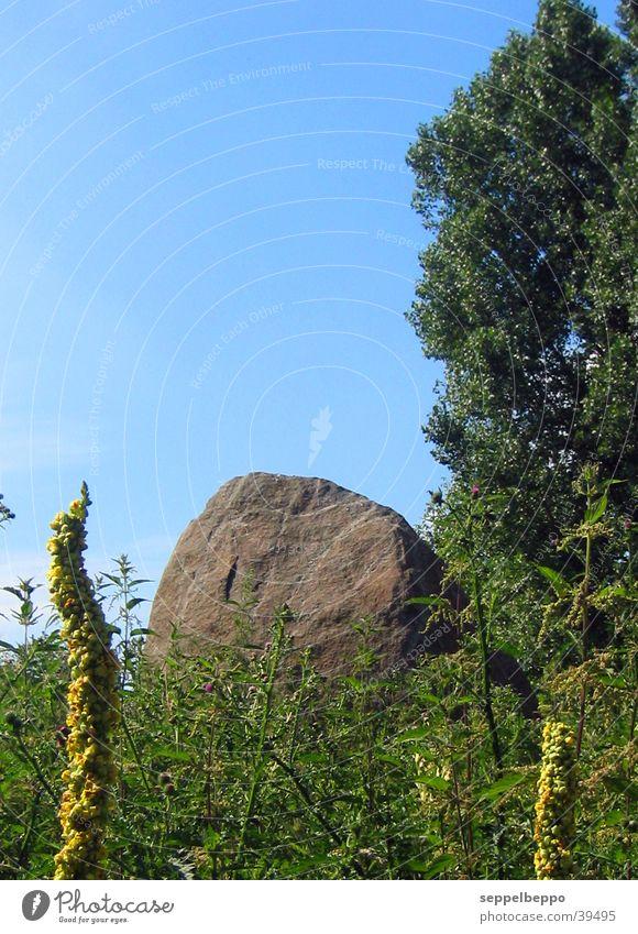 findling Sommer Wiese grün Berge u. Gebirge Stein blau Pflenzen Bruchstück Steinblock