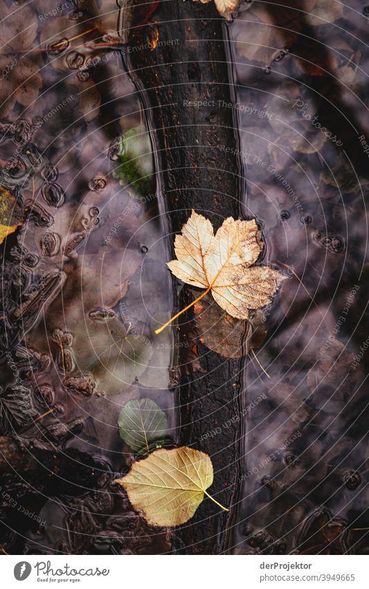 Letzte Blätter im Schlachtensee im Winter III Naturerlebnis Ferien & Urlaub & Reisen Lebensfreude Landschaft Tourismus Licht Kontrast Schatten Sonnenstrahlen