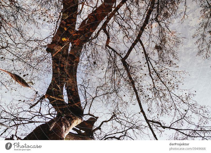 Spiegelung von Baum im Schlachtensee im Winter Naturerlebnis Ferien & Urlaub & Reisen Lebensfreude Landschaft Tourismus Licht Kontrast Schatten Sonnenstrahlen