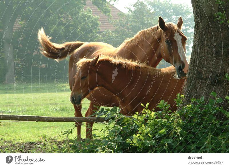 Stutfohlen Natur Pferd Fohlen