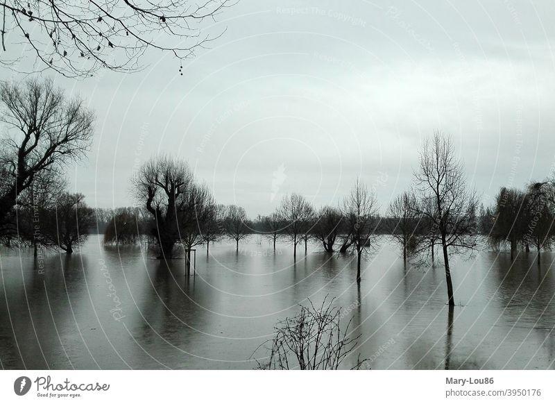 Bäume im Hochwasser Baum Bäume im Wasser Fluss Rhein Landschaft Natur Naturerlebnis Naturaufnahme Reflexion & Spiegelung Menschenleer Umwelt ruhig Himmel Gefahr