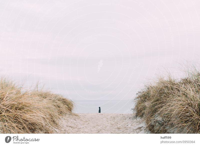 ein einsamer Strandspaziergänger zwischen den Dünen Mensch Wege & Pfade Nordsee Wattenmeer Einsamkeit Küste Silhouette Horizont Winter gehen alleine Wattwandern
