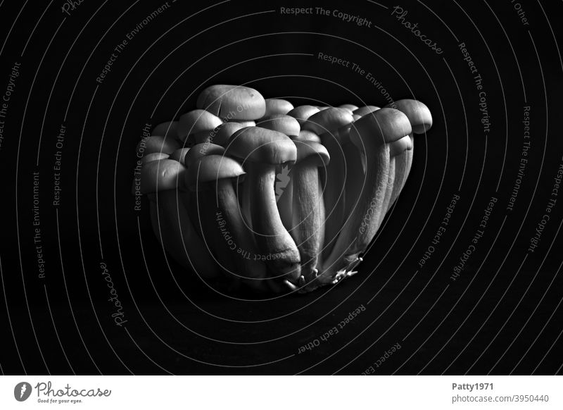 Shimeji Pilze Lebensmittel Schatten Licht Menschenleer Ernährung Nahaufnahme