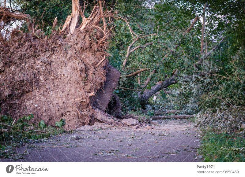 Entwurzelte, umgestürzte Bäume blockieren nach einem Sturm einen Weg Baum entwurzelt Natur Außenaufnahme Umwelt Unwetter Klima Tag Klimawandel 2019 Ettlingen
