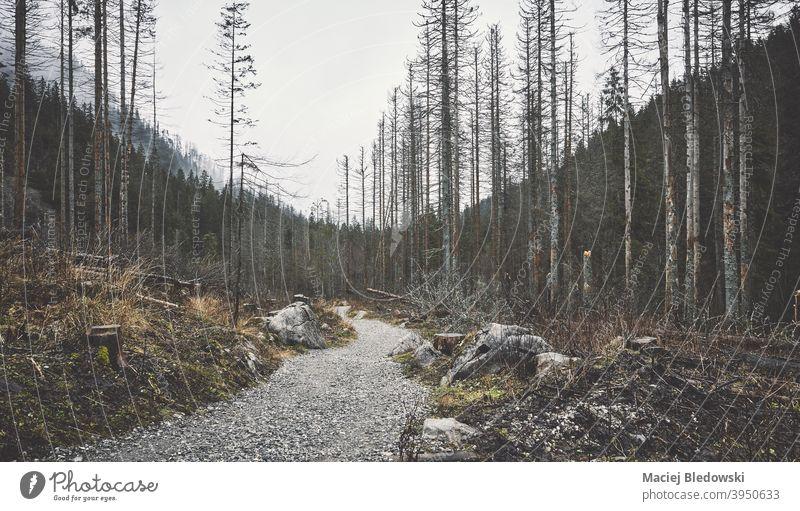 Dunkle Berglandschaft an einem regnerischen Tag. Berge Wald Landschaft Regen retro altehrwürdig Weg Natur geheimnisvoll dunkel Nebel Fernweh Abenteuer Baum grün