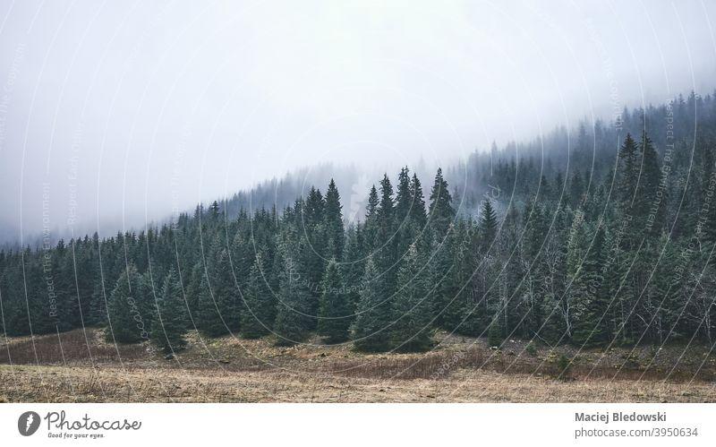 Dunkle neblige Berglandschaft an einem regnerischen Tag. Berge Wald Landschaft Regen Nebel retro altehrwürdig Natur geheimnisvoll dunkel Fernweh Abenteuer Baum