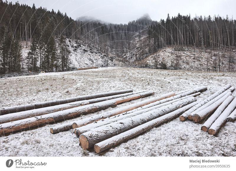 Berglandschaft mit Holzstämmen an einem verschneiten Tag. Koscieliska Tal Berge Wald Landschaft Schnee Winter Tatra Baum Totholz Nutzholz Natur Forstwirtschaft